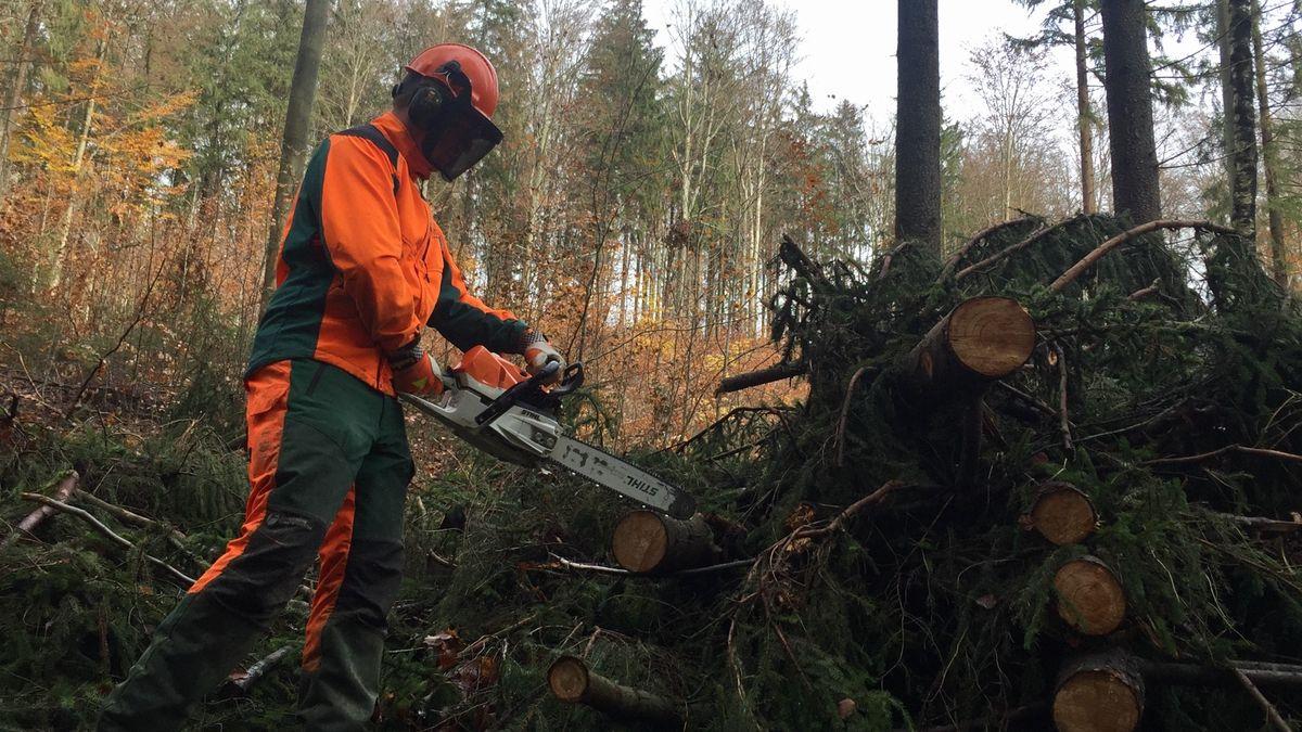Waldarbeiter Mario Hutterer beim Aufarbeiten von Holz im Bayerischen Wald