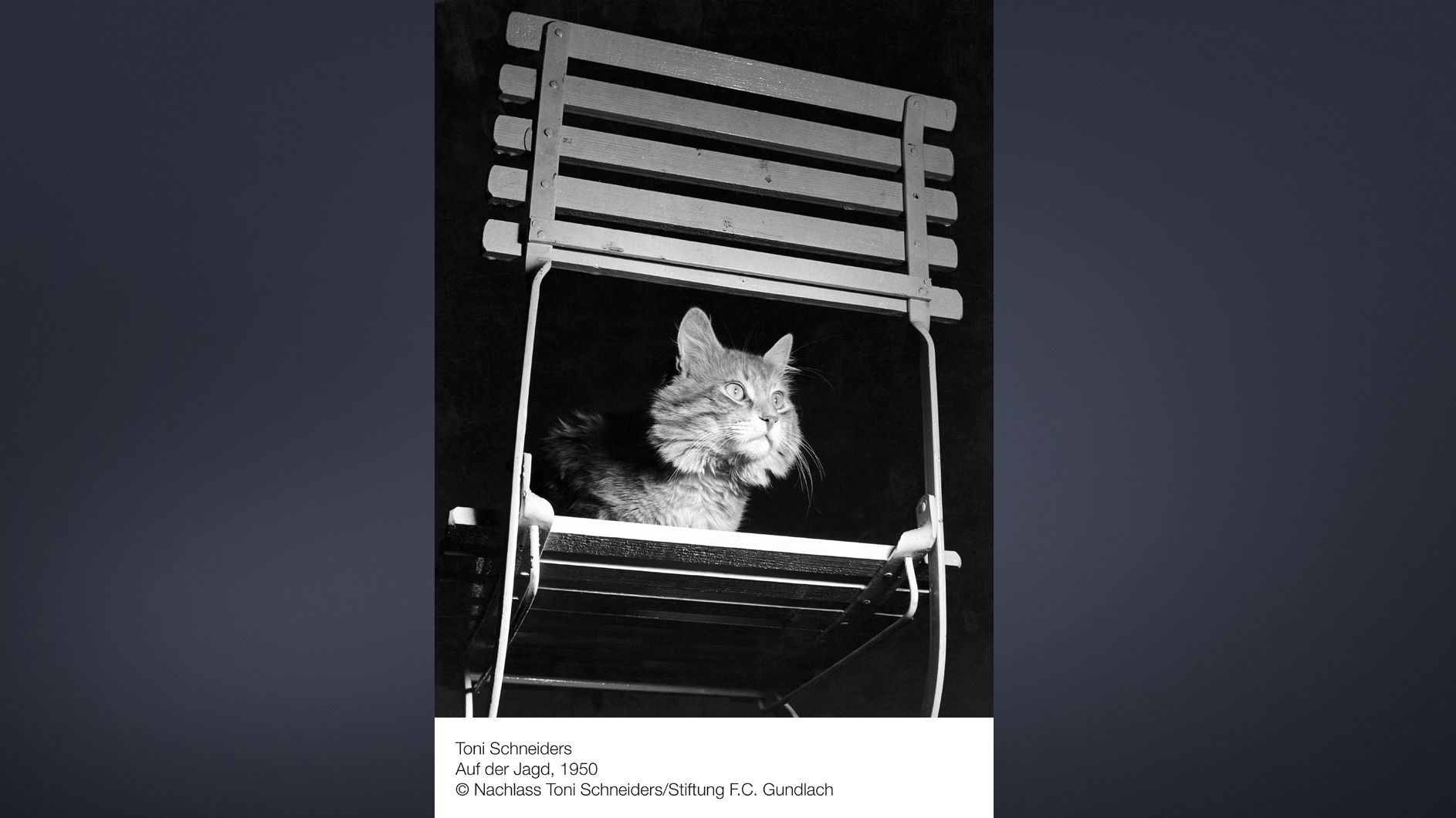 Schwarzweißfoto einer Katze auf einem Gartenstuhl in der Dunkelheit