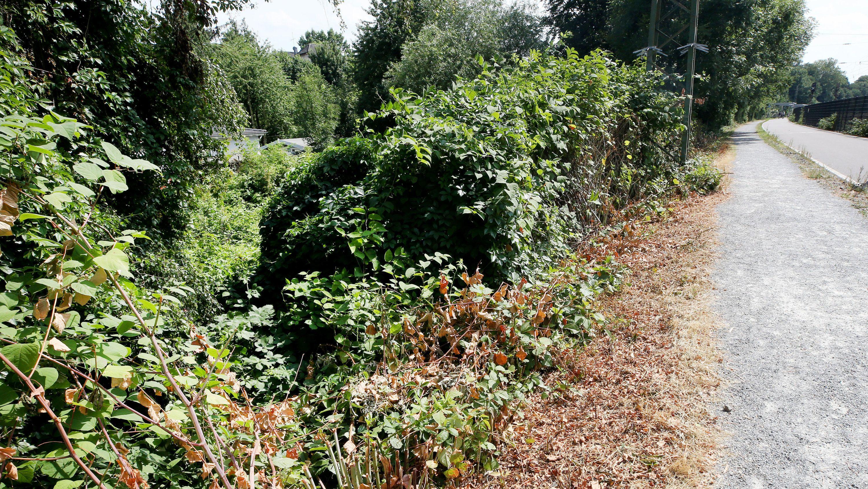 Gebüsch und Radschnellweg in der Nähe des Tatorts