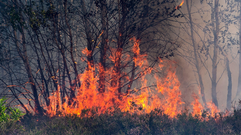 Waldbrand - Symbolbild