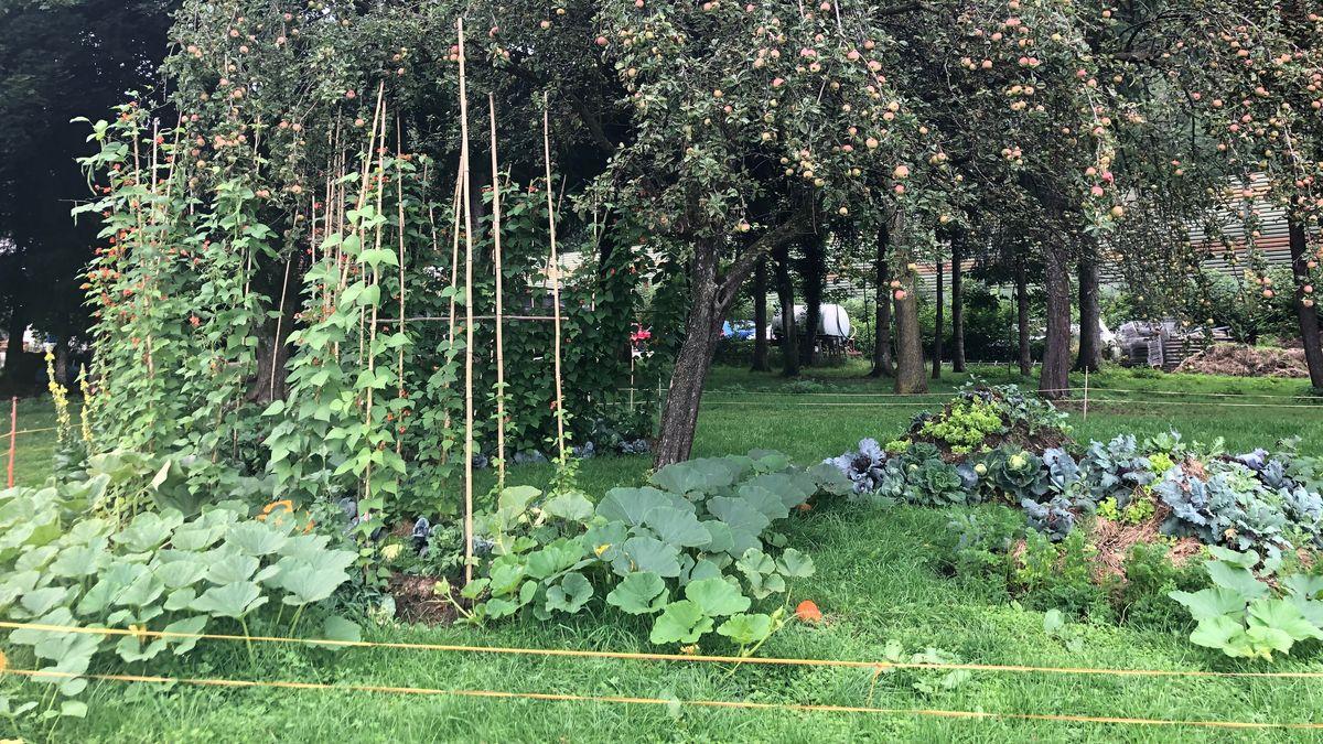 Gemüse im ersten Themenpark der Humanen Landwirtschaft in Frasdorf.