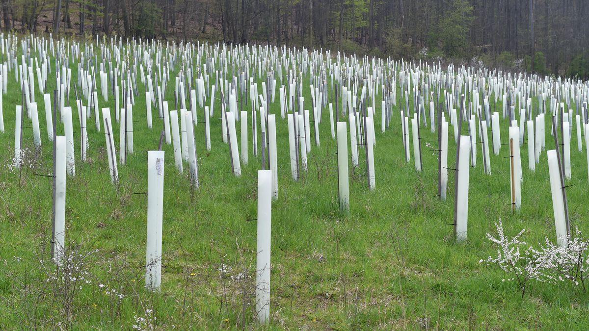 Baumschutzhüllen