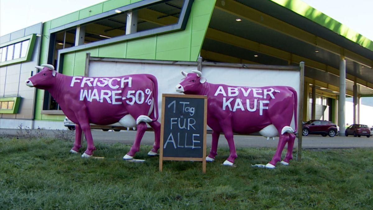 Zwei lila-weiße Kühe vor einem dem Großhändler C + C Oberallgäu werben für den Ausverkauf