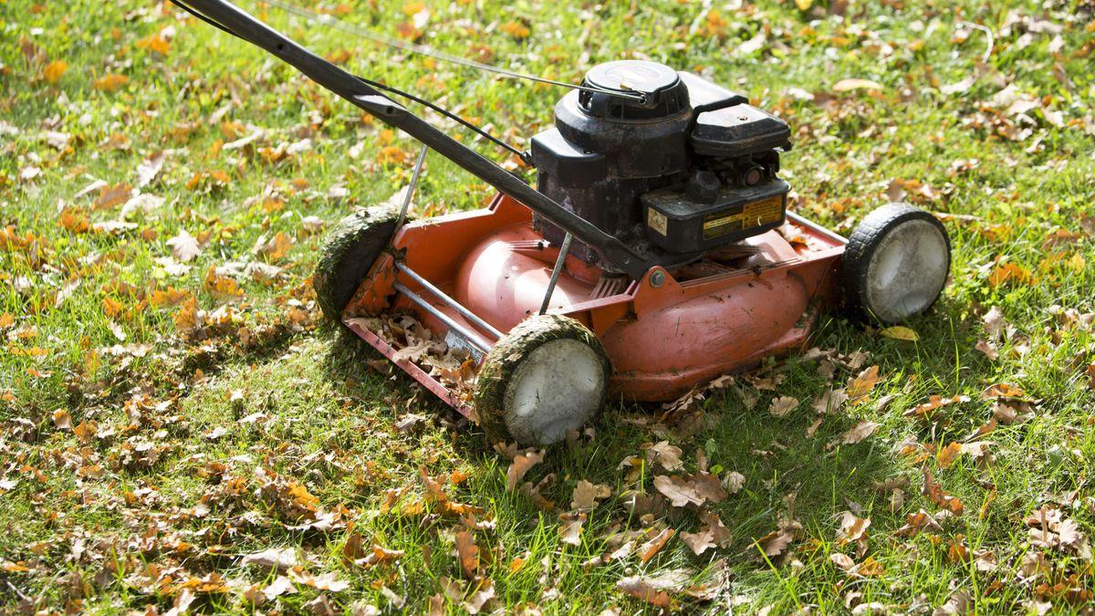 Alter Rasenmäher mäht einen mit Laub versetzten Rasen