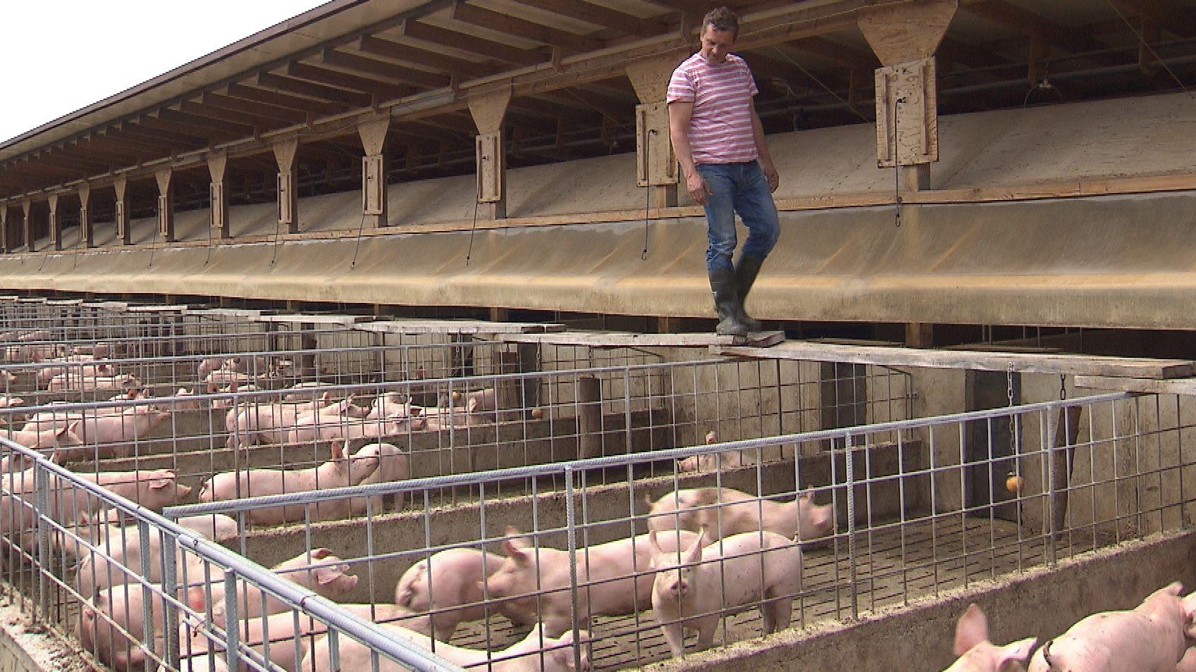 Schweinemastbetrieb in Affing
