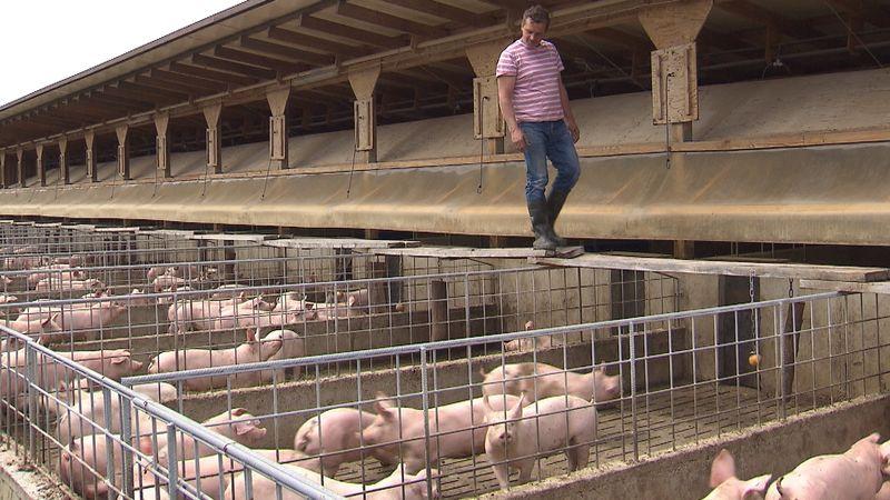 Lieblings Zu geringe Nachfrage nach Bio-Schweinefleisch | BR24 &EC_64
