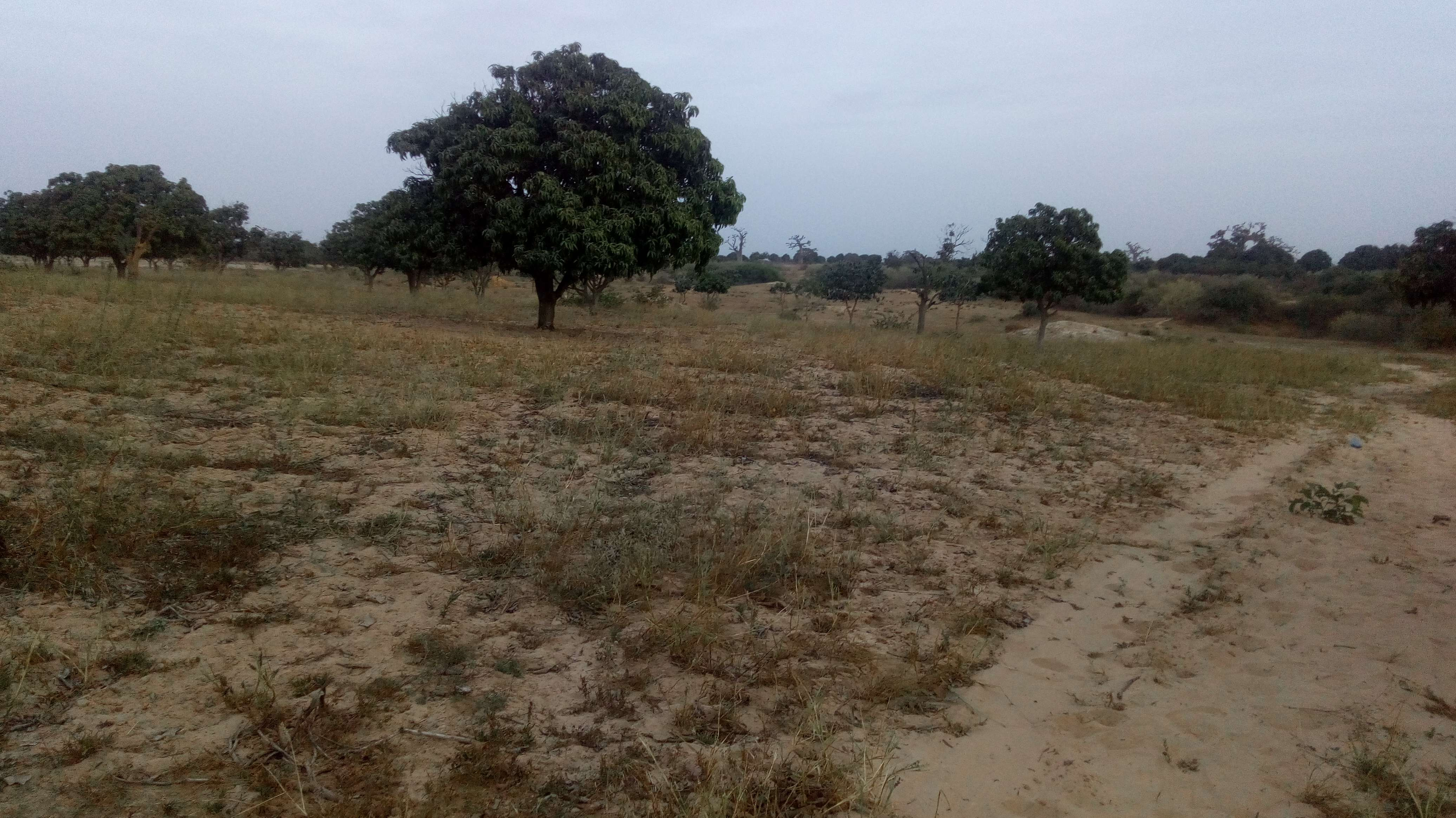 Grund für ökologische Landwirtschaft: Senegal.