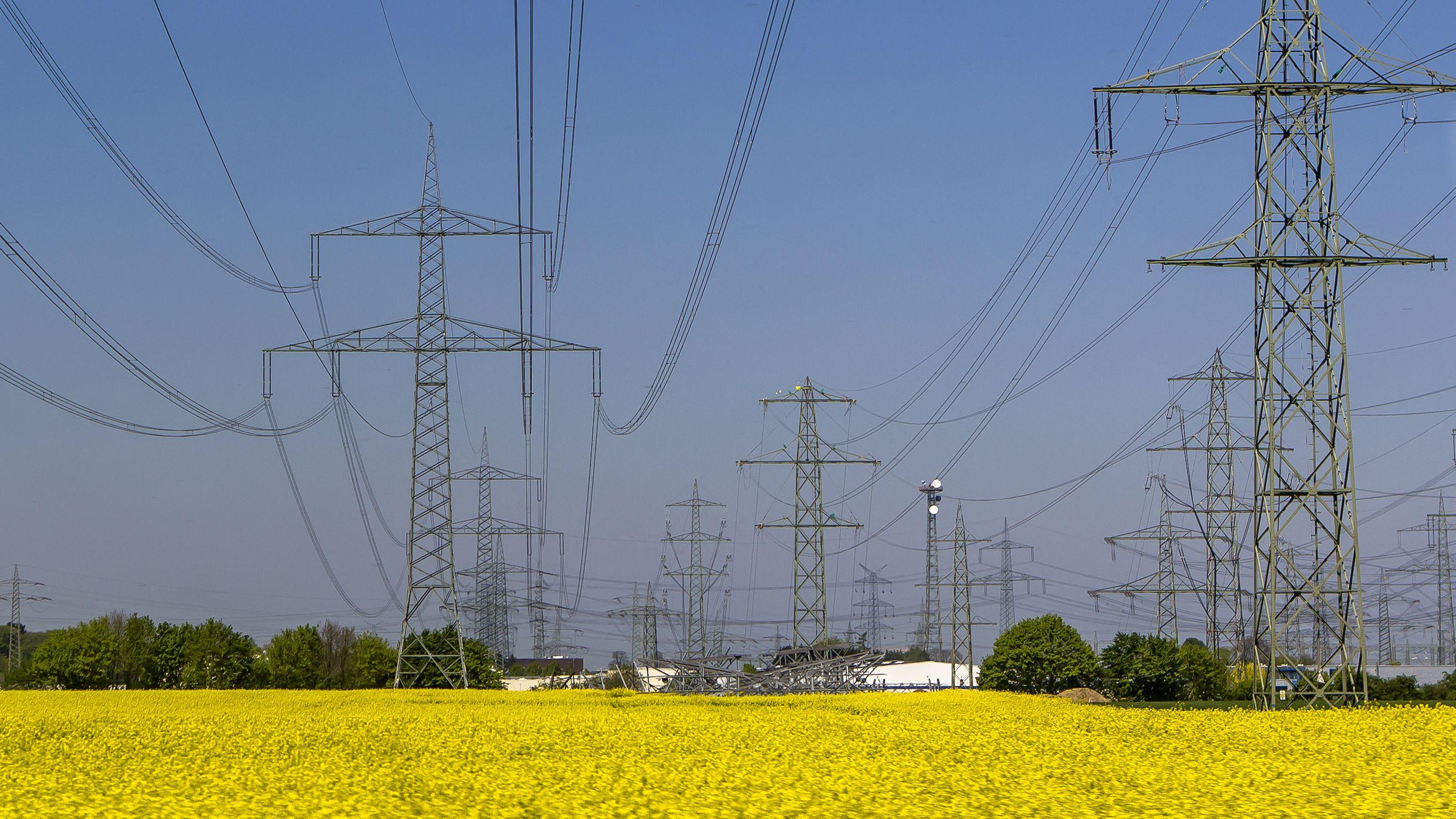 Mehrere Stromtrassen verlaufen über ein Rapsfeld