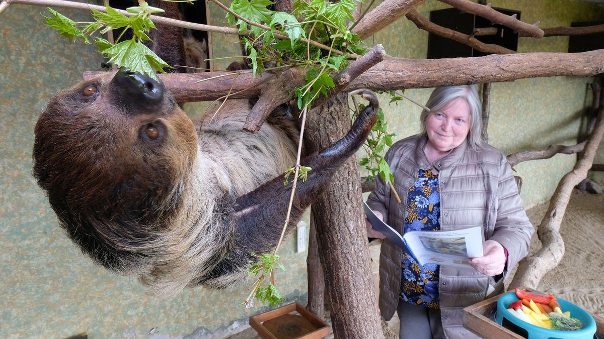 Faultier Charlotte frisst im Zoo von Halle junge Ahornblätter. Biologin Jutta Heuer beobachtet sie dabei.