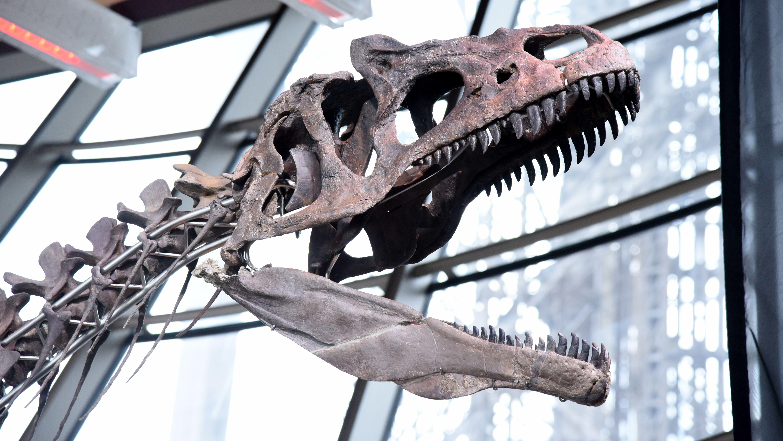 Juni 2018: Versteigerung eines Dinosaurier-Skeletts in Paris