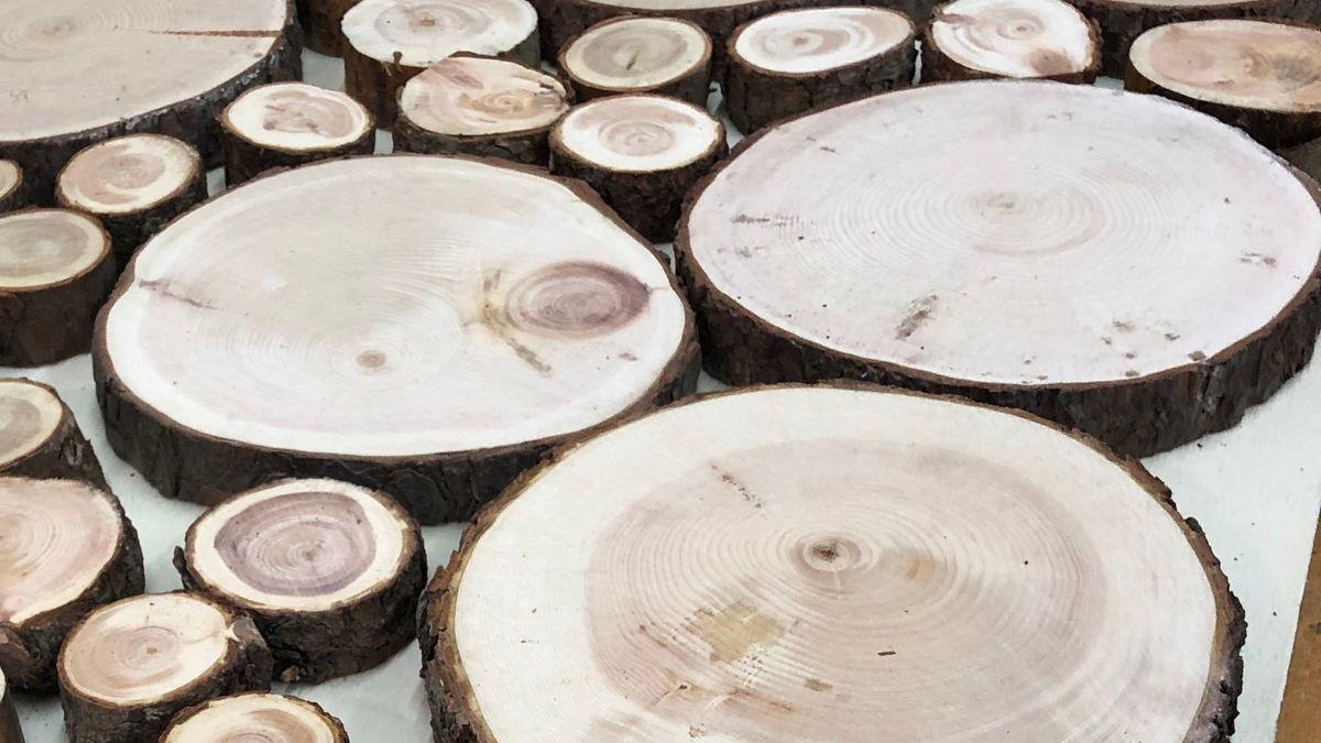 Baumstammscheiben in veschiedenen Größen