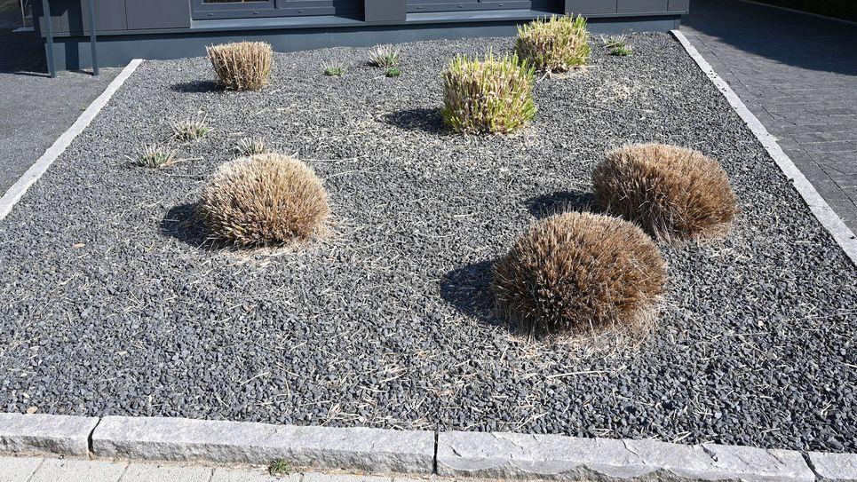Pflanzen ragen aus einem Vorgarten mit grauen und schwarzen Kieselsteinen.