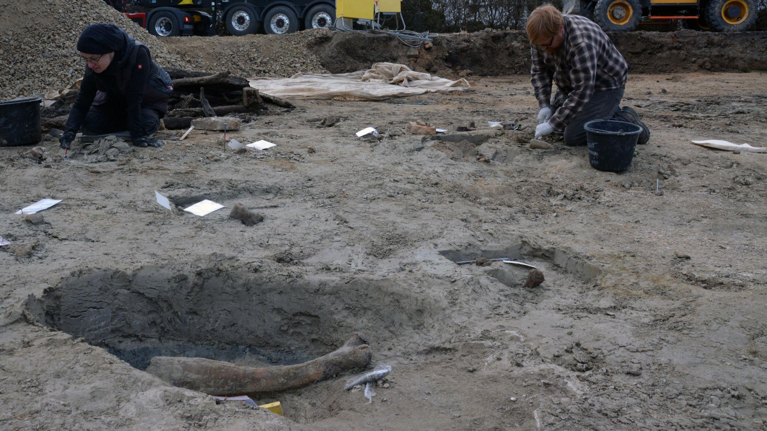 Die Grabungsstelle in Riekofen: Nach dem Stoßzahn sind weitere Mamutknochen gefunden worden.