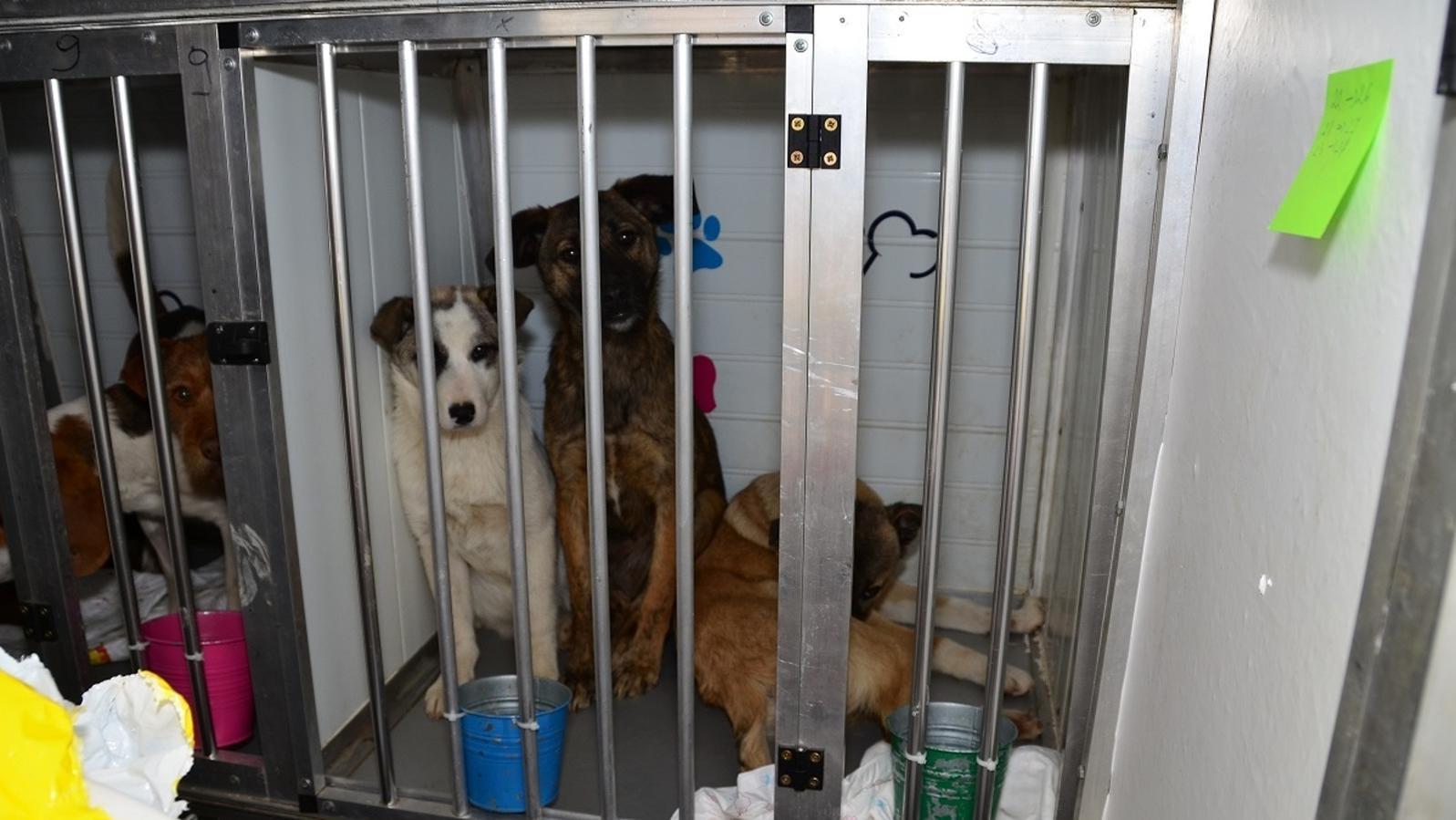 Hunde im illegalen Tiertransport