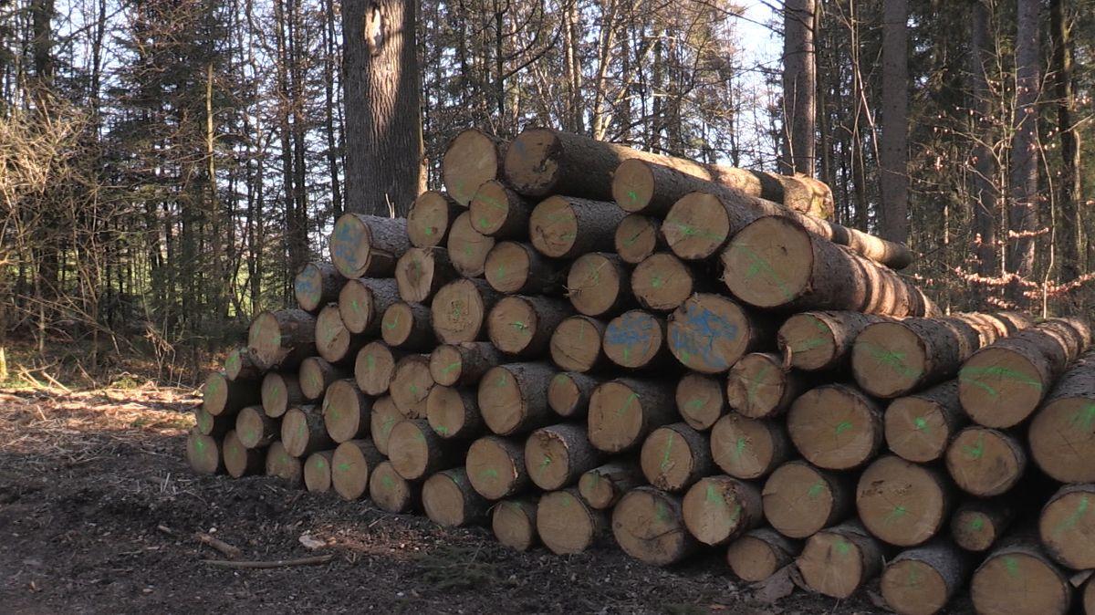 Ein großer Stapel Holzstämme im Wald