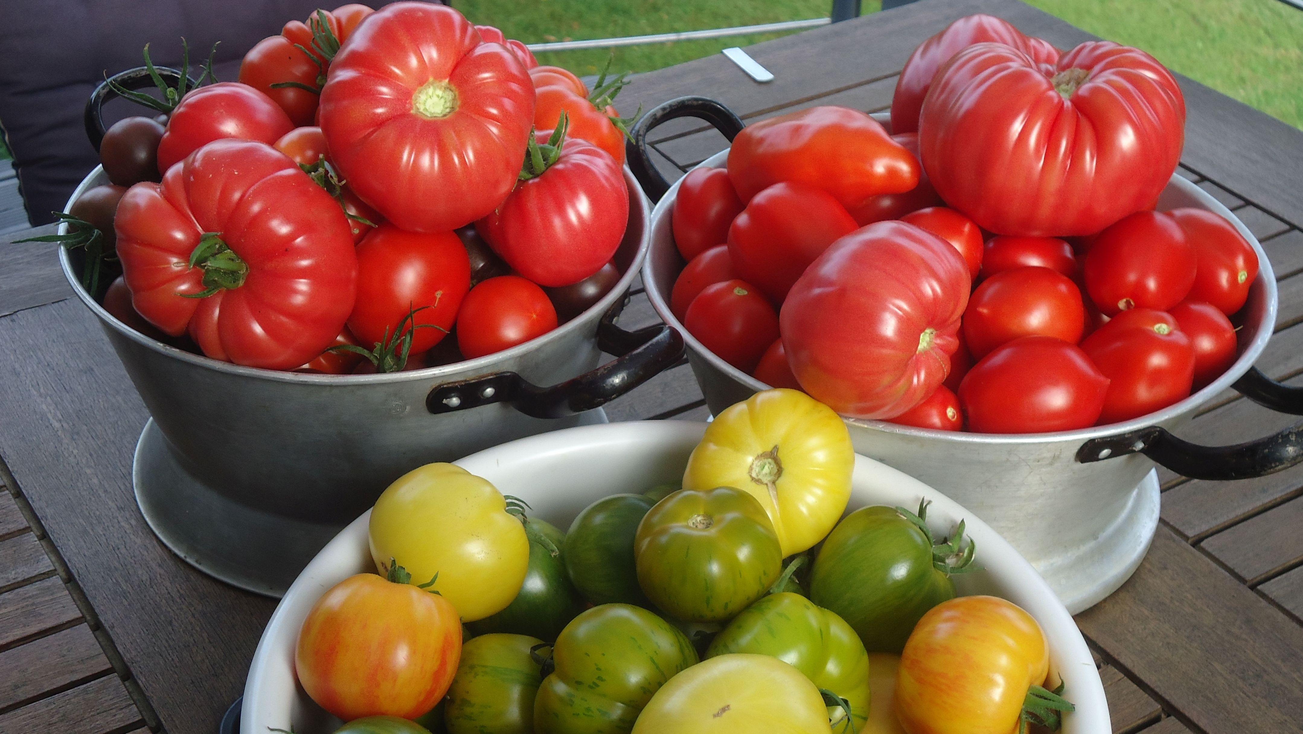 Gemüse aus dem Garten von Gabriela Schimmer-Göresz.