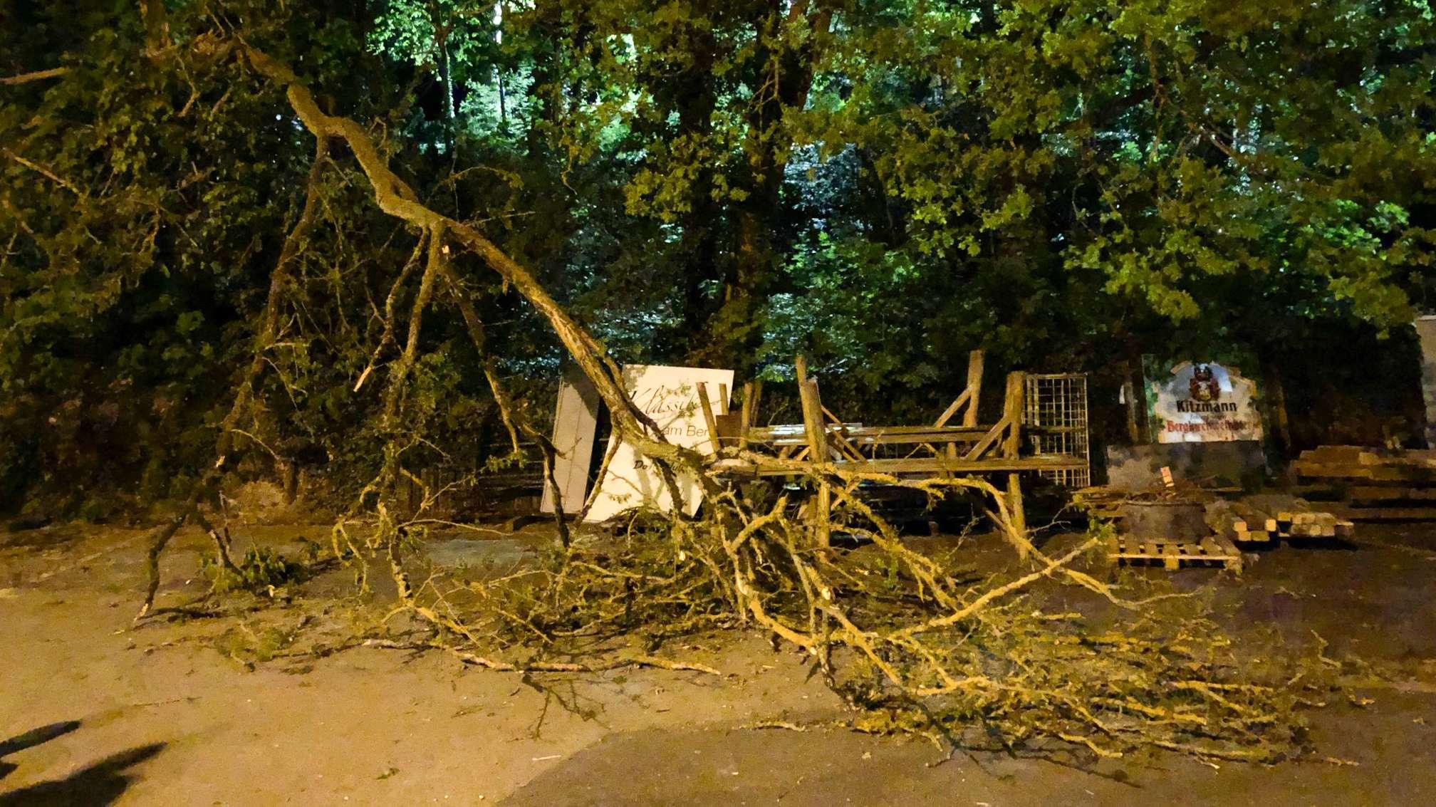 Umgestürzter Baum auf dem Erlanger Bergkirchweihgelände