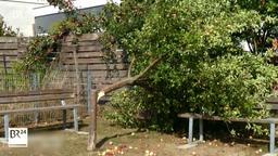 Umgesägter Baum in Zapfendorf | Bild:BR-Fernsehen