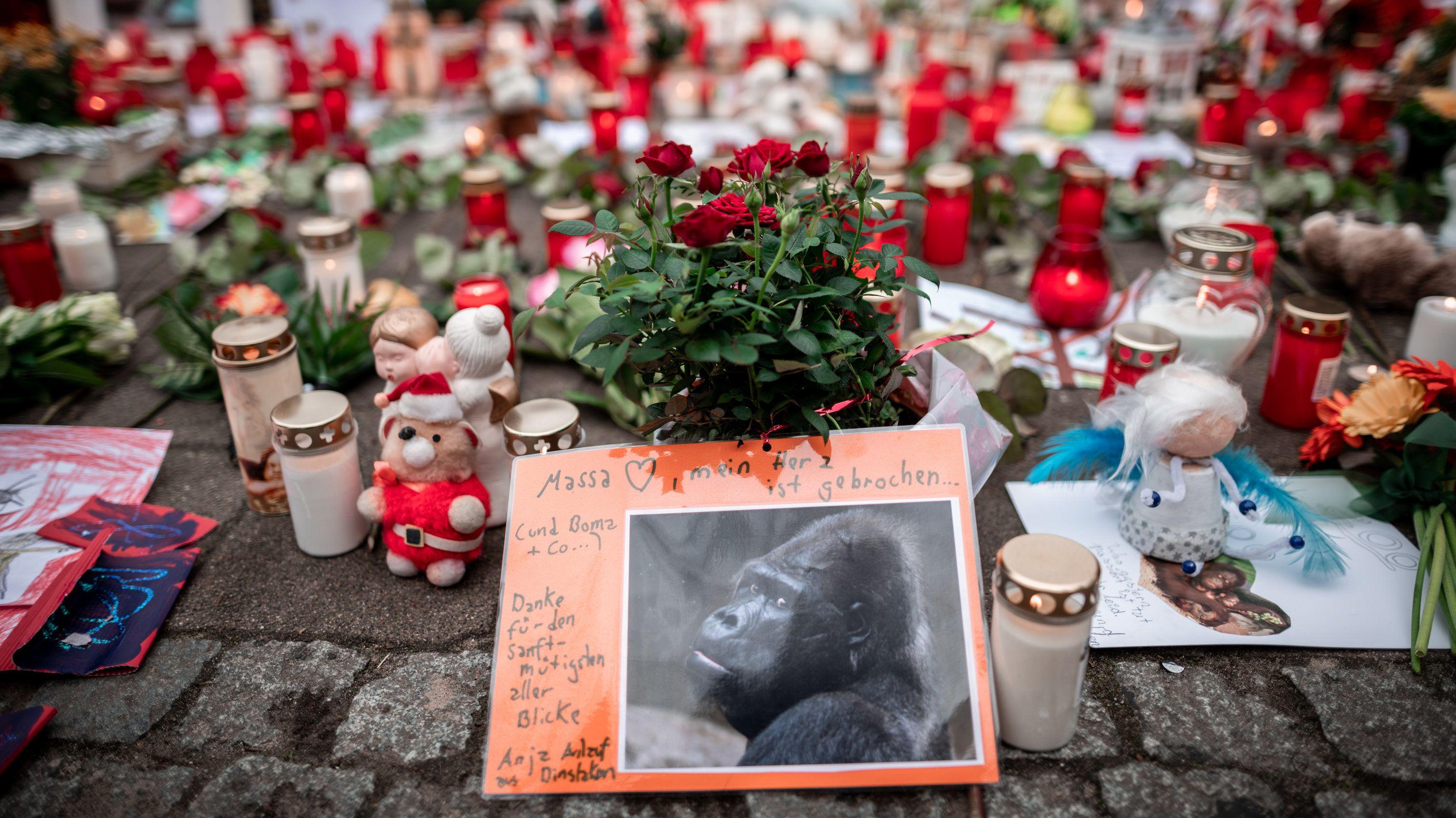 Bild des Gorillas Massa mit Trauerkerzen und Blumen.