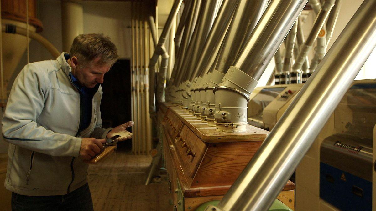 Müllermeister Rudolf Sagberger kontrolliert das frische Mehl in seiner Mühle