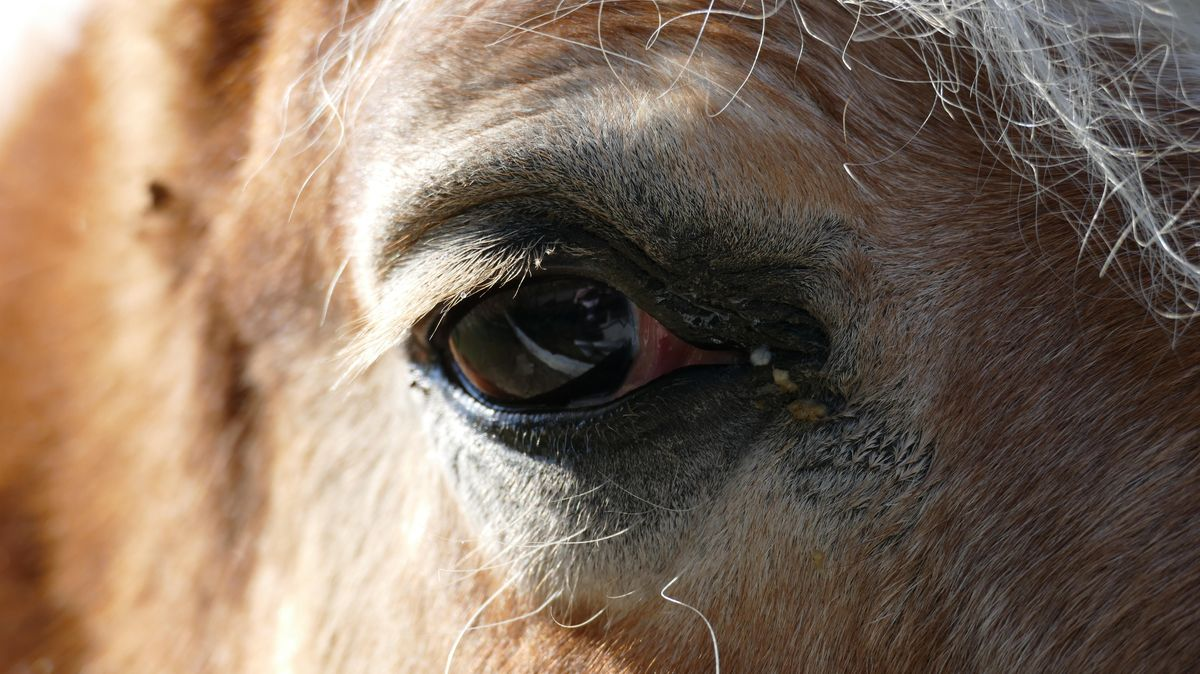 Symbolbild: Pferd