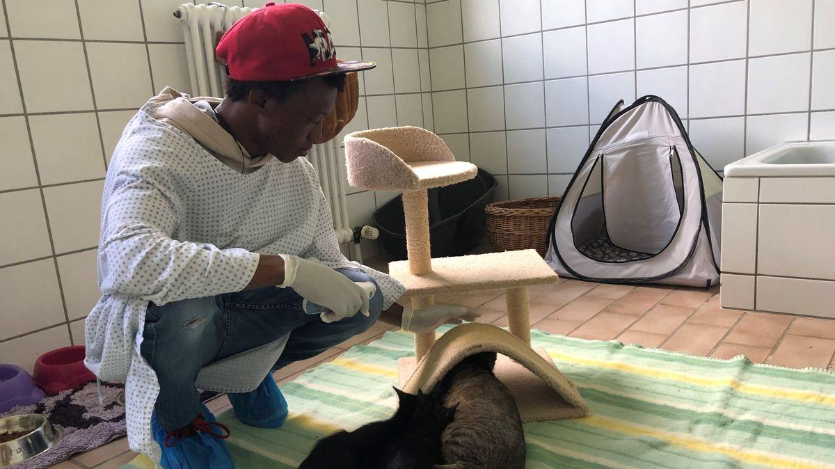 Tierheimhelfer Mo in der Katzenstation