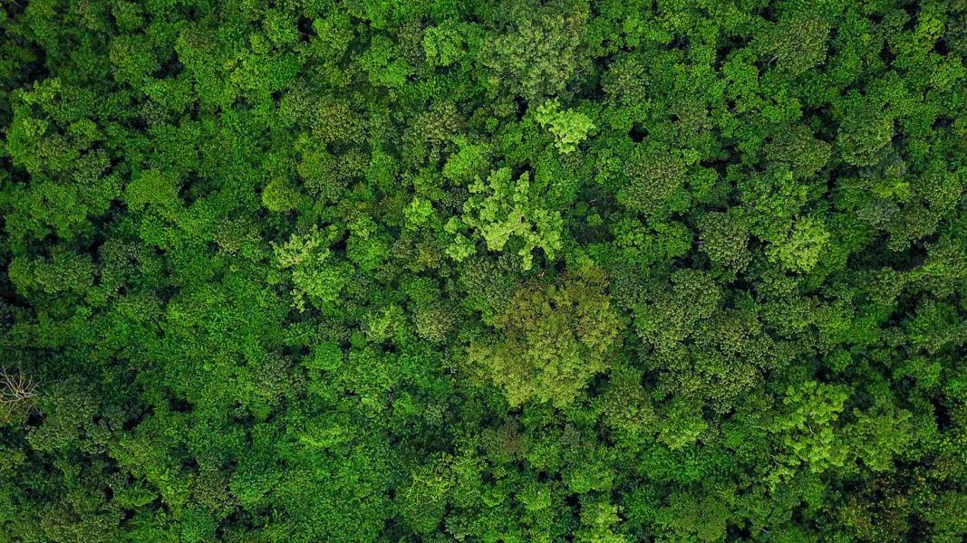 Wald von oben fotografiert