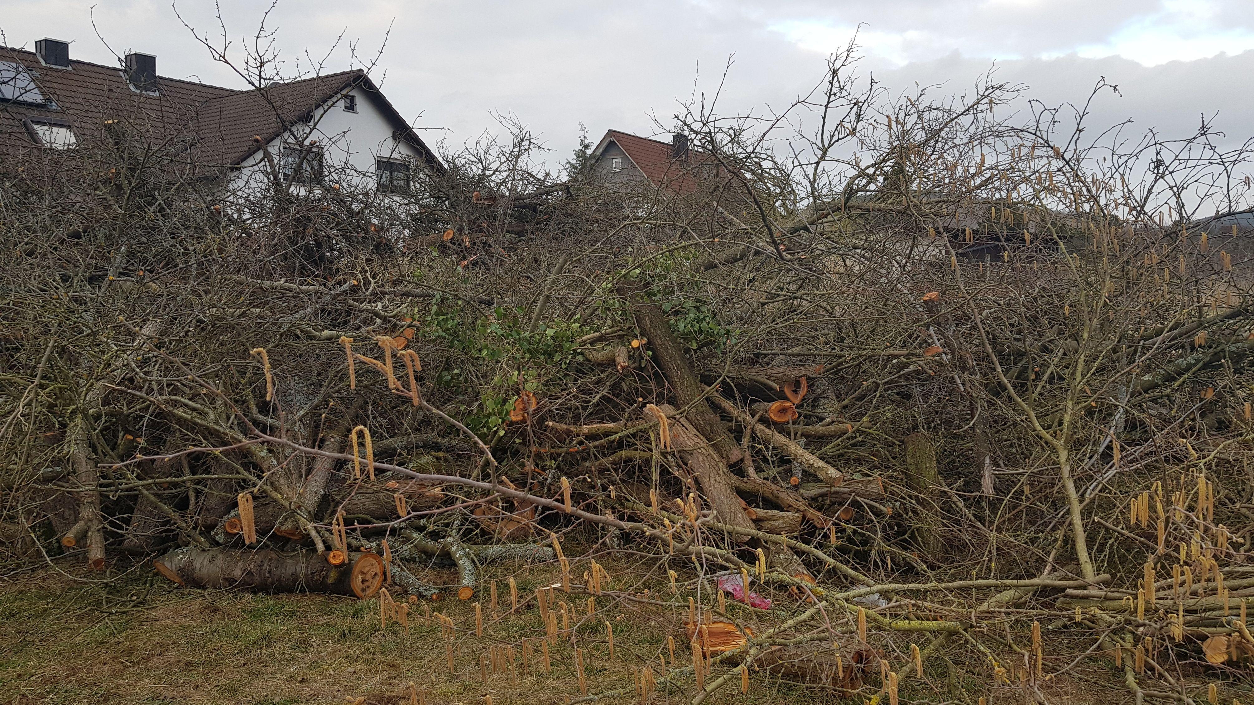 Gerodete Obstbäume in Thüngersheim