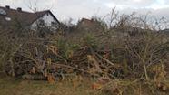 Gerodete Obstbäume in Thüngersheim | Bild:Steffen Jodl / BUND Naturschutz