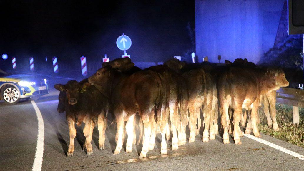Rund 25 Rinder sind in Miltenberg bei einem Heu- und Strohballen-Brand ausgebüxt