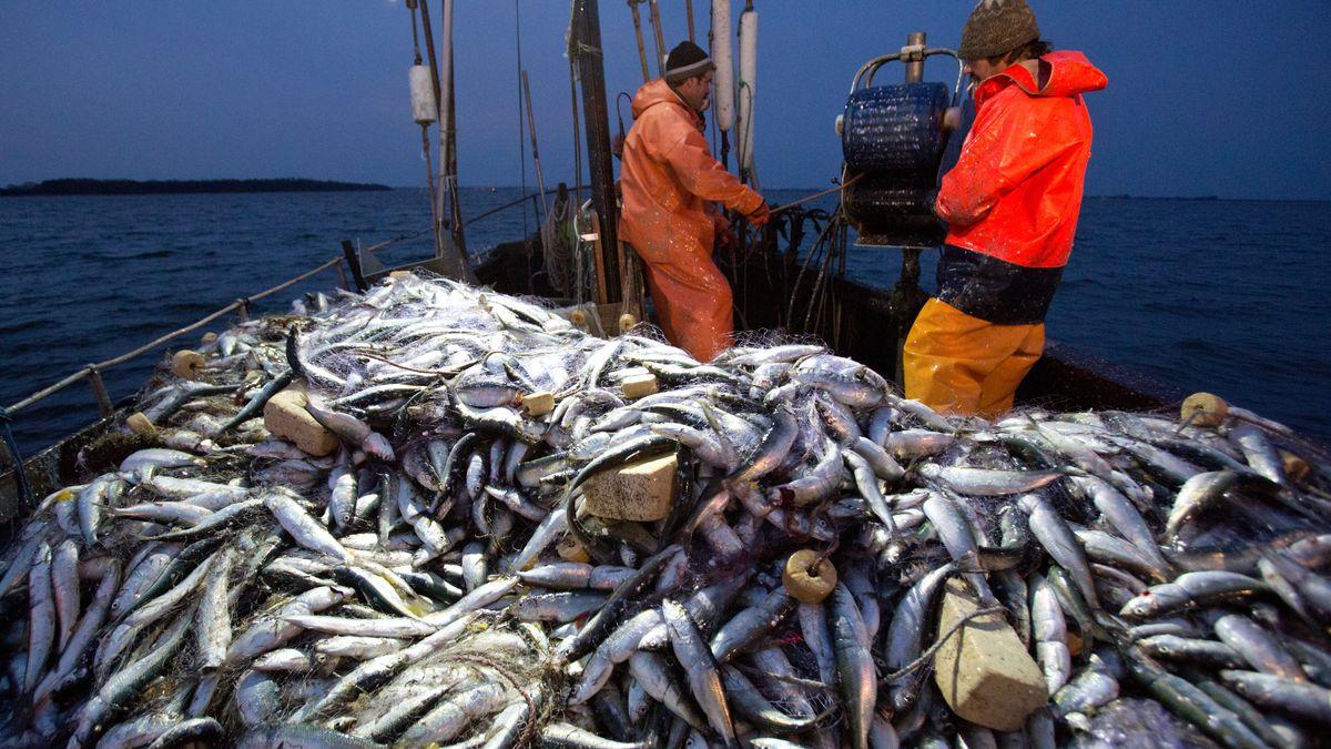 Fischer und Fische auf Fischerboot