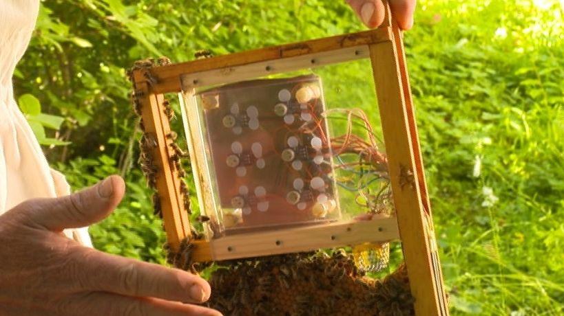 Messtechnik für den Bienenstock