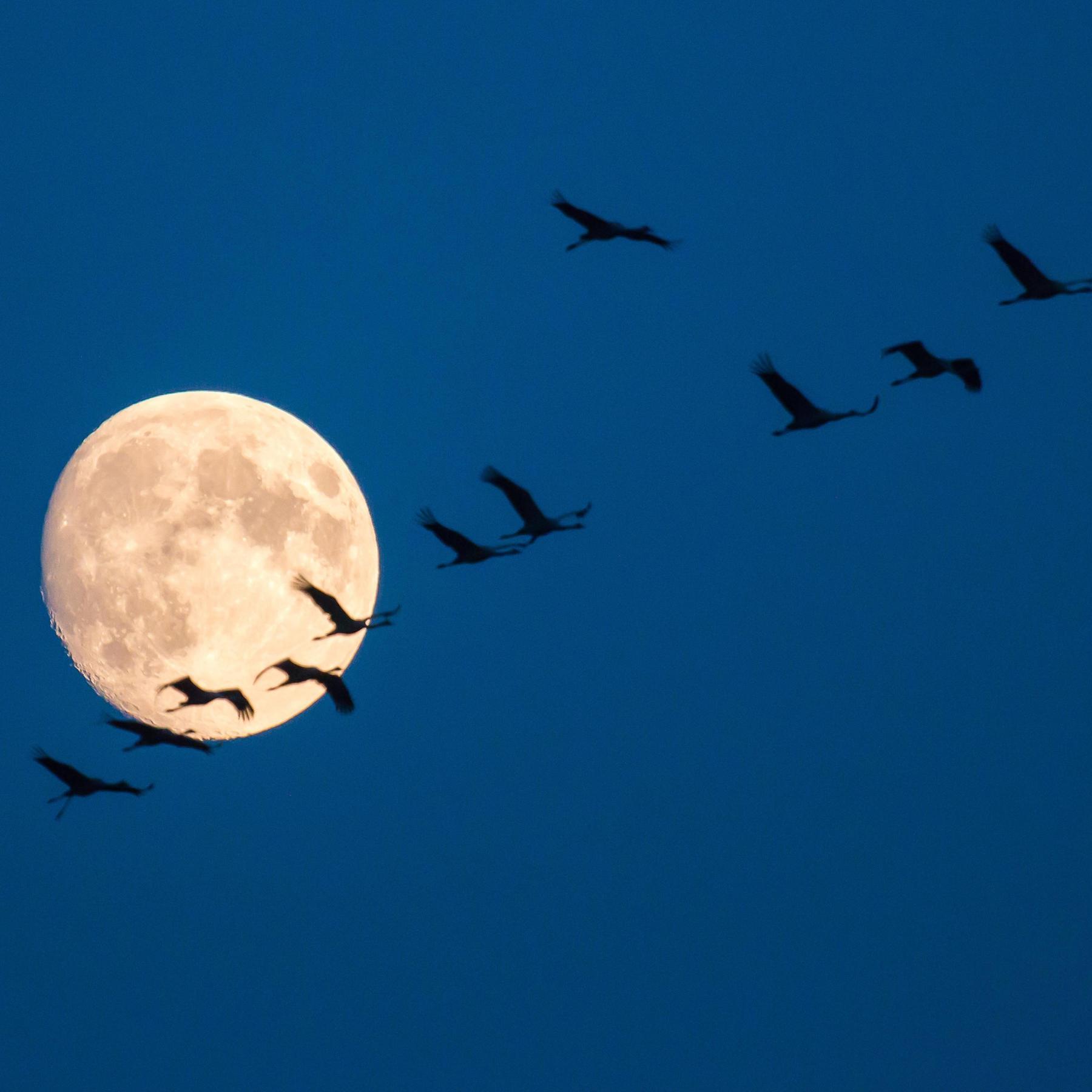 Auf Wanderschaft - Wie Zugvögel ihren Weg finden