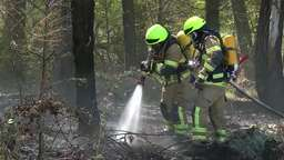 Löscharbeiten in einem Waldstück bei Lind (Lkr. Fürth)   Bild:News5/Klein