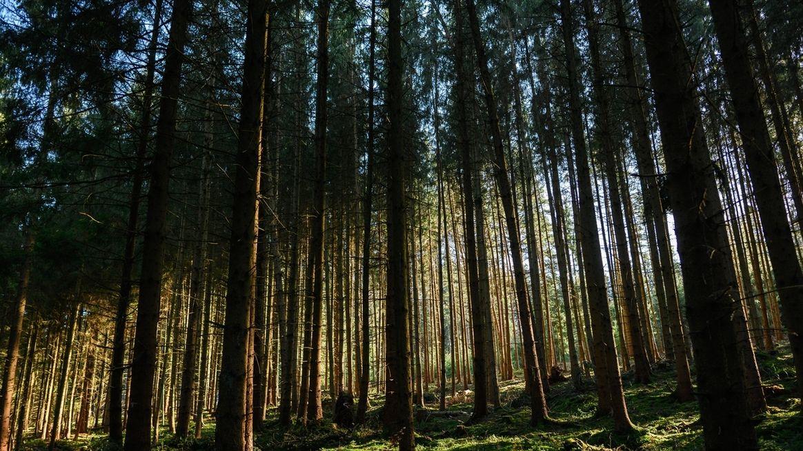 Frühlingslicht im Wald