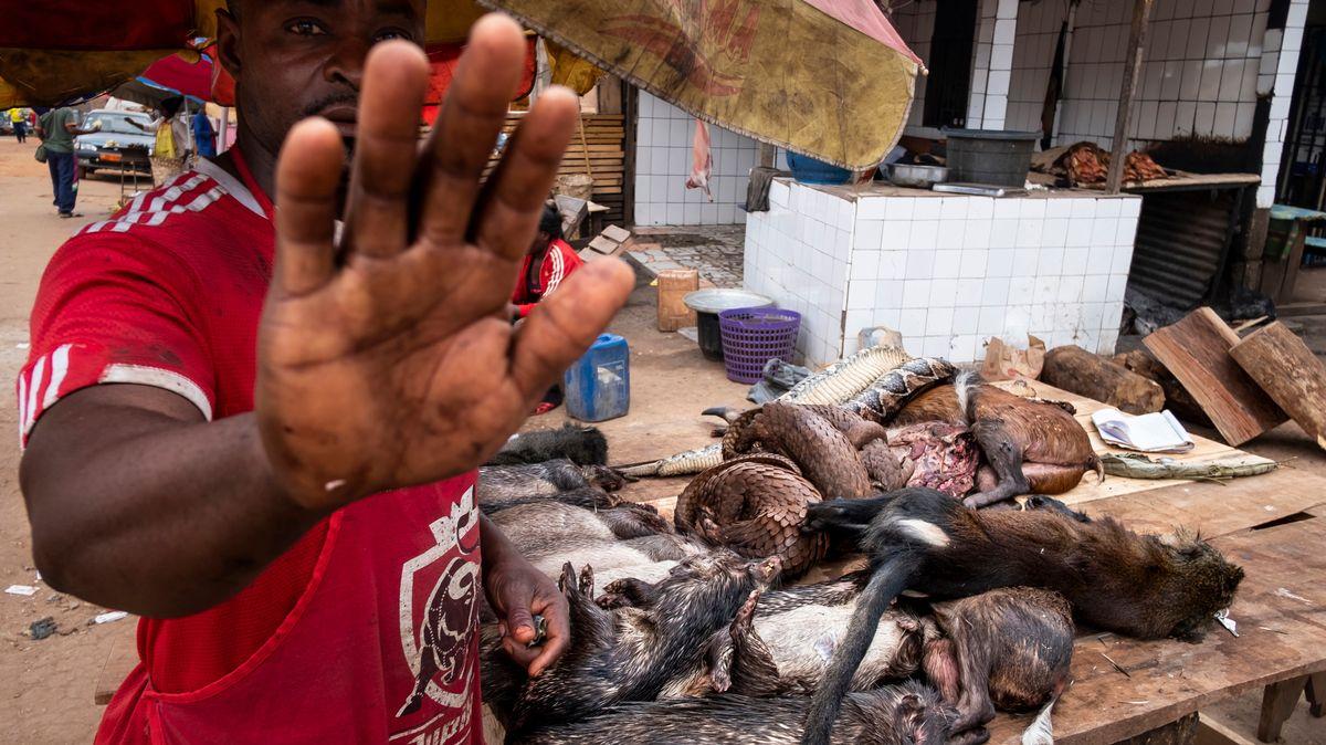 World Press Photo 2020, Kategorie Natur, Bilderstrecke von Brent Stirton über Schuppentiere (Pangoline)