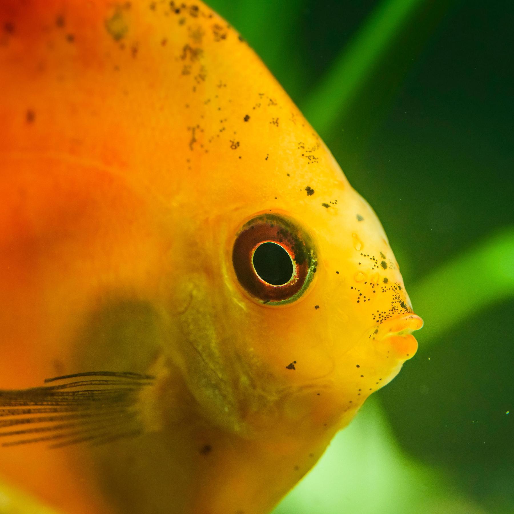 Fische - Die unterschätzten Lebewesen