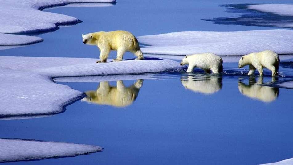 Eine Eisbärenmutter marschiert mit ihren Jungen auf Futtersuche über Eisschollen (Archivbild)