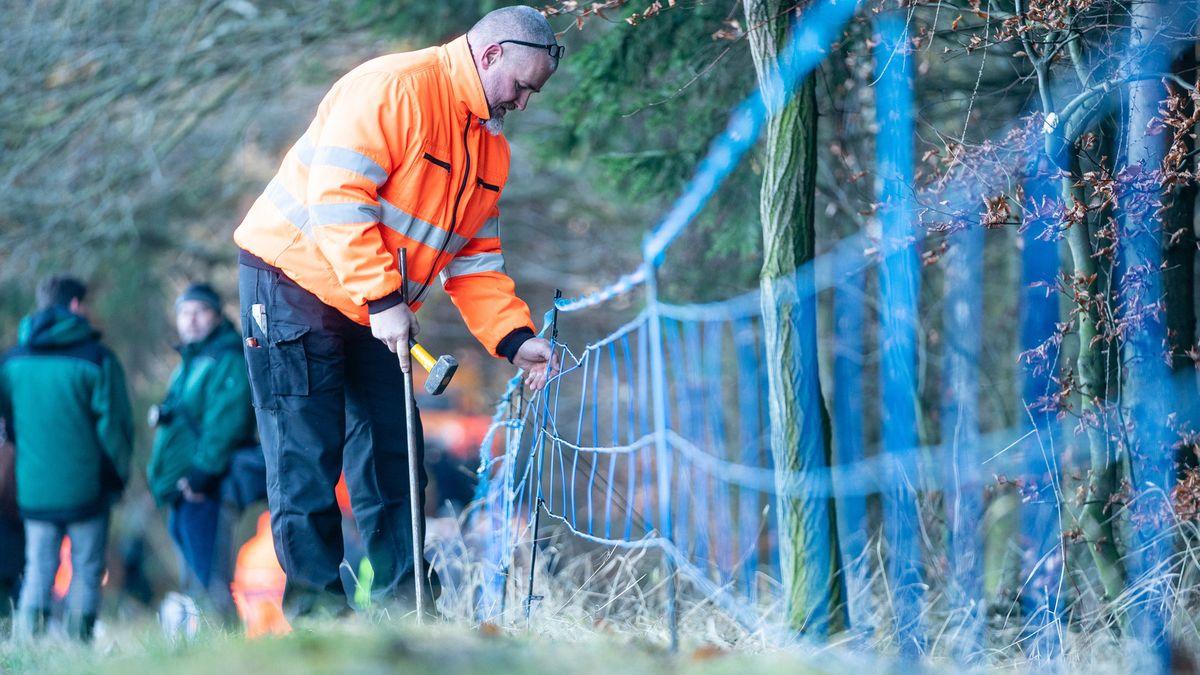 Ein Mitarbeiter eines sächsischen Veterinäramtes baut einen Elektro-Wildabwehrzaun inklusive Duftkomponente an einem Waldrand auf.