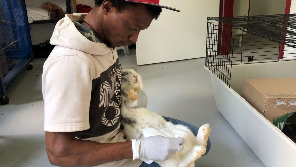 """Flüchtling """"Mo"""" arbeitet als Tierpfleger im Nördlinger Tierheim."""