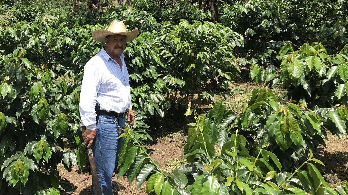 Kaffeebauer auf einer guatemaltekischen Plantage