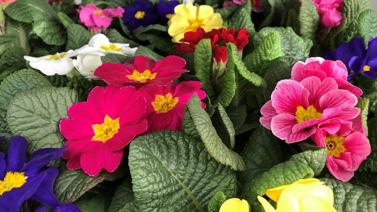 Blumen im Gewächshaus