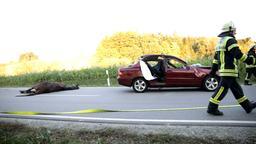 Tote Stute liegt auf der Straße neben dem Unfallwagen   Bild:BR