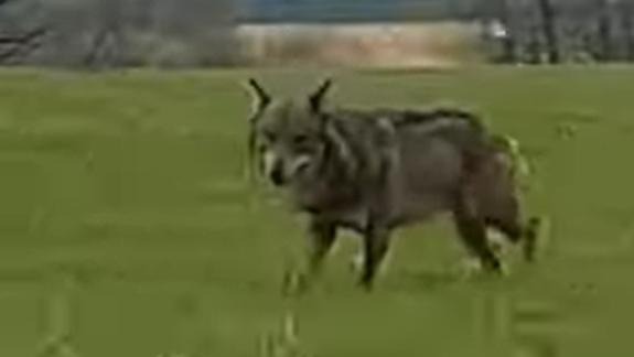 Screenshot aus dem Video.