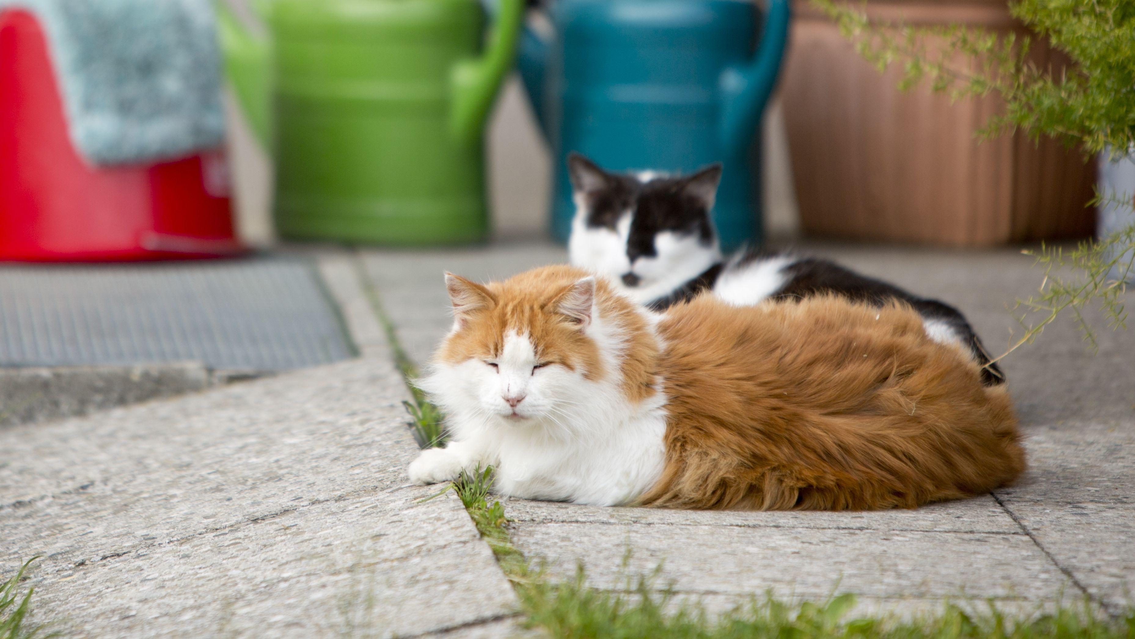 Katzen liegen vor der Haustüre.