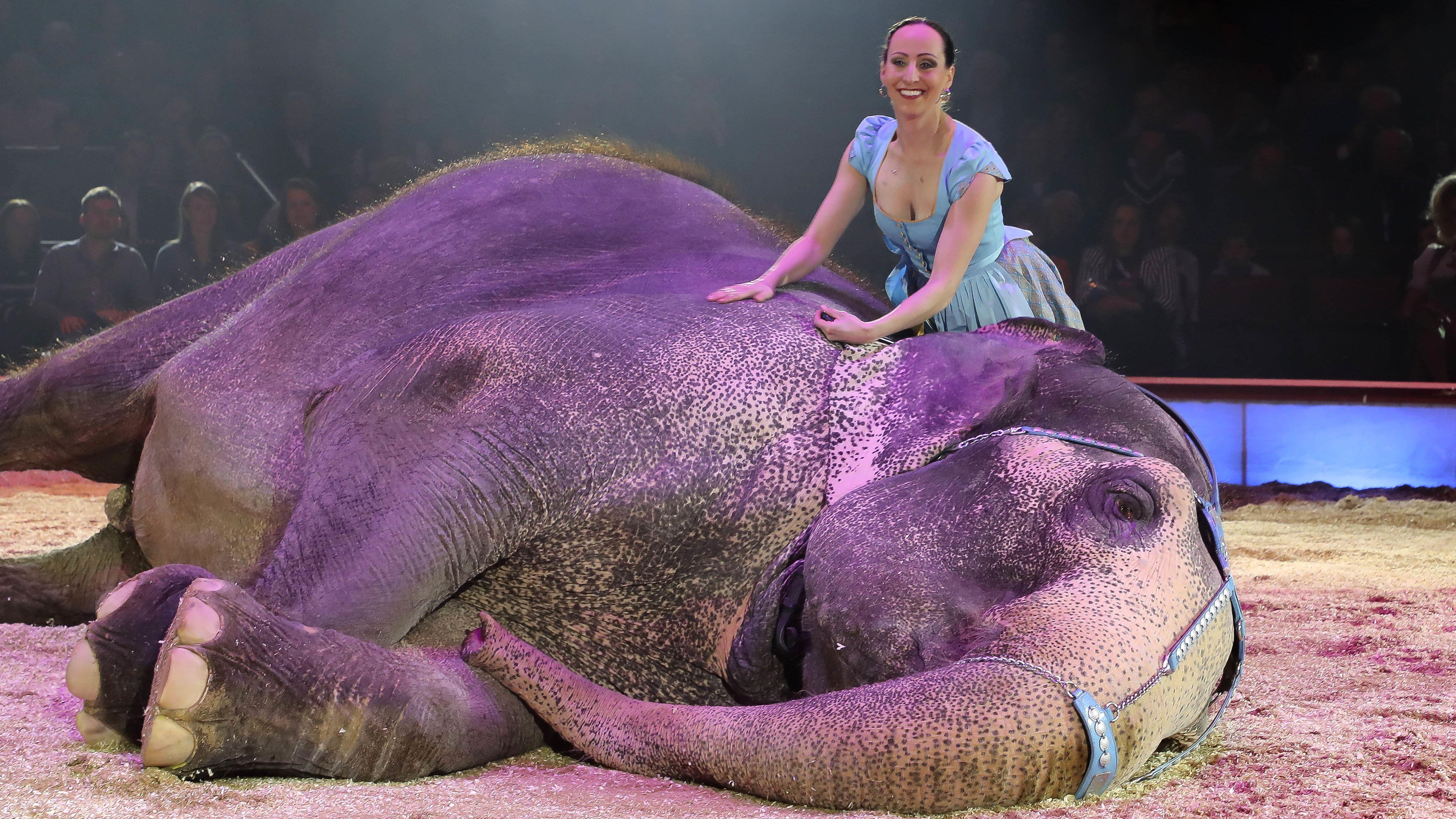 Jana Mandana Lancey-Krone streichelt einen liegenden Elefanten in der Manege in München