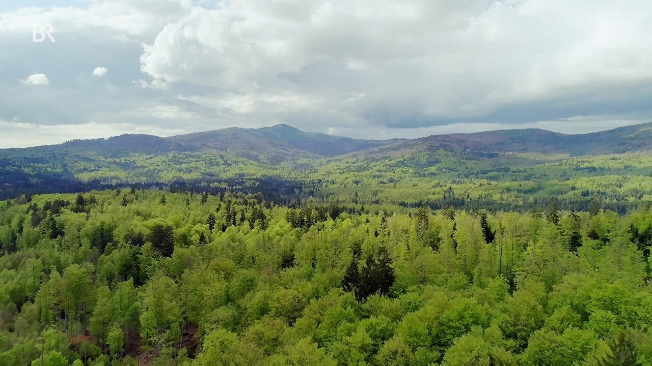 Eine Wildnis mitten in Europa : Der Böhmerwald (Teil 2)