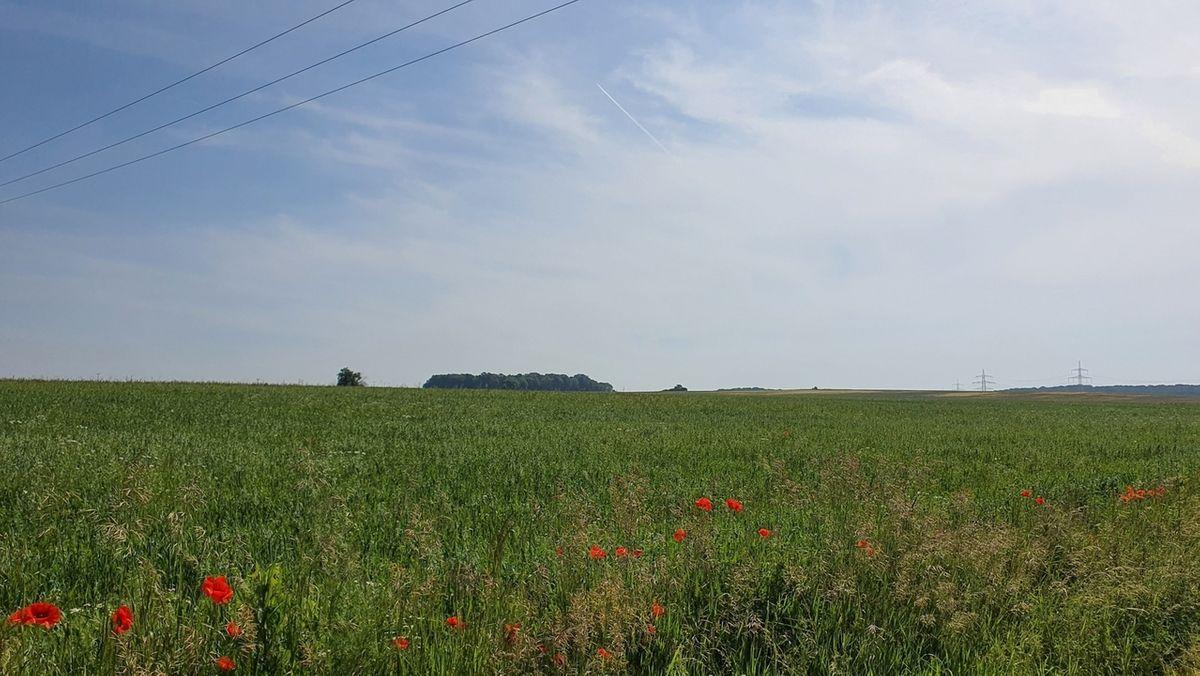 In diesem Gebiet südöstlich von Grettstadt leben die streng geschützten Ortolane.
