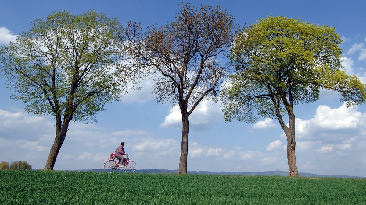 Radfahrerin in einer Allee bei Pfatter