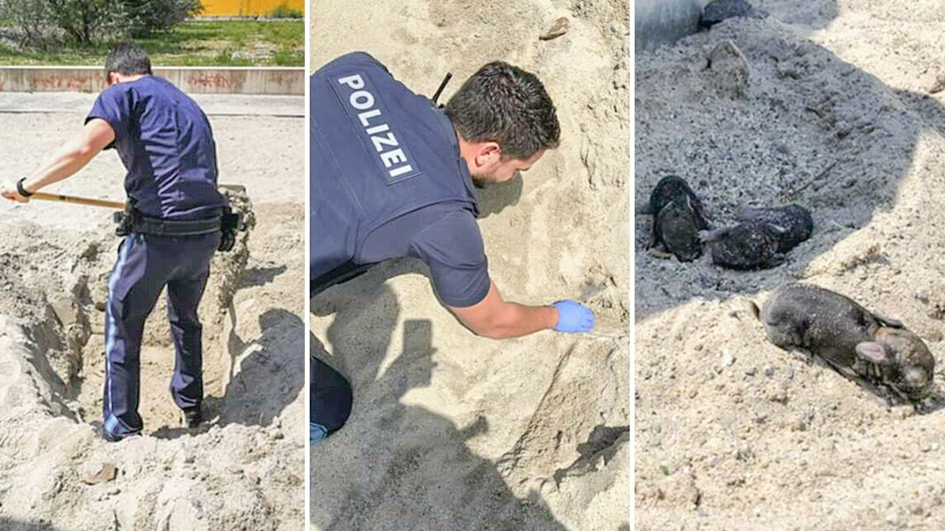 Die Polizei hat auf einem Spielplatz verschüttete Kaninchen-Babys gerettet
